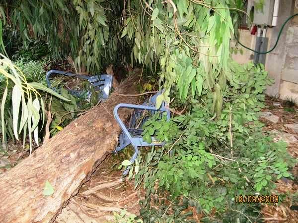 נפילת העץ