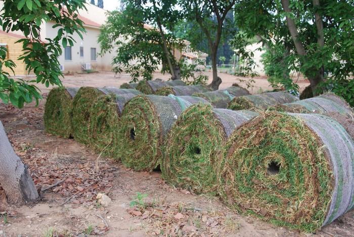 שותלים דשא בטוקטלי